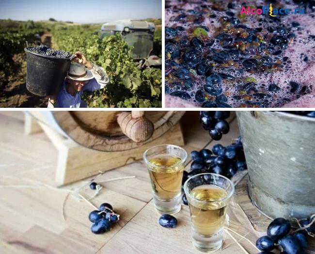 Как сделать брагу из отжима винограда